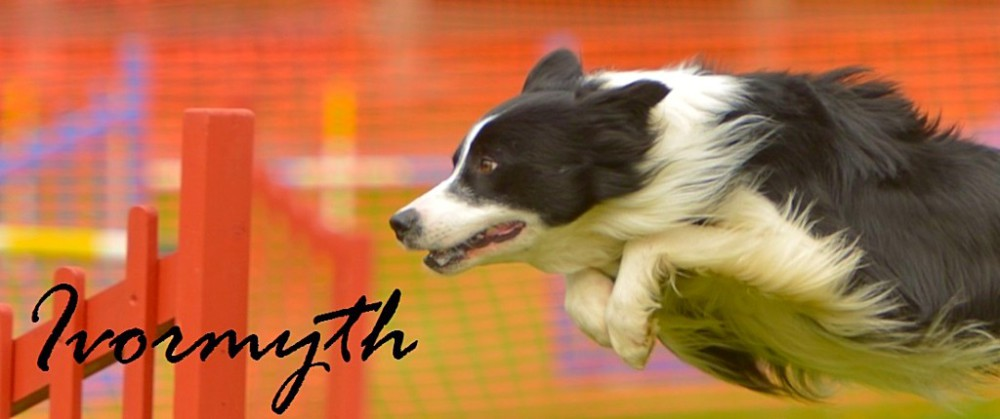 Ivormyth Border Collie DJ